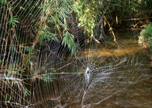 о пауках