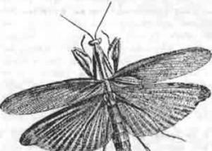 Церокома