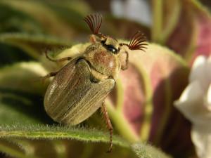 Что будет, если исчезнут насекомые