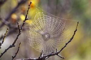 Как пауки создают паутину