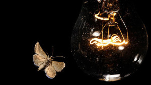 Почему насекомые летят на свет