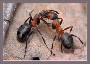 Почему в тропиках много муравьёв