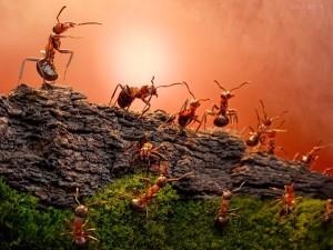 Почвообразующая деятельность муравьев