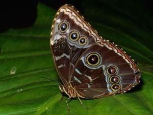 Пятна на крыльях бабочек