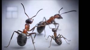 Семья муравьев