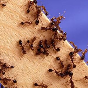 Взаимное обучение муравьев