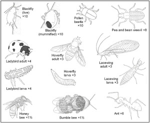 Классификация насекомых