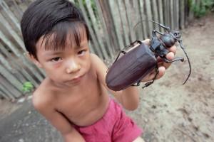 Самое маленькое и самое большое насекомое в мире