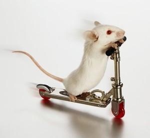 Мышь домовая (белая)