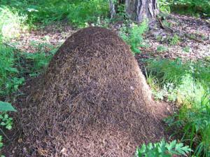Диффузные гнезда