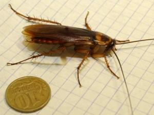 Почему выживают тараканы
