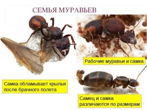 Выполнение особью задач семьи - закон муравейника