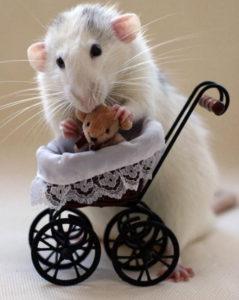 Мыши самые симпатичные грызуны